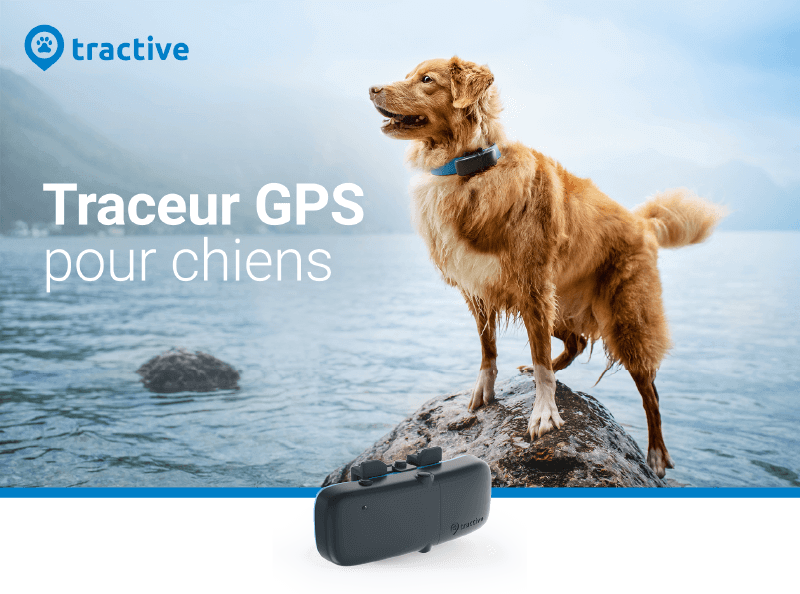 TRACTIVE TRACEUR GPS chien